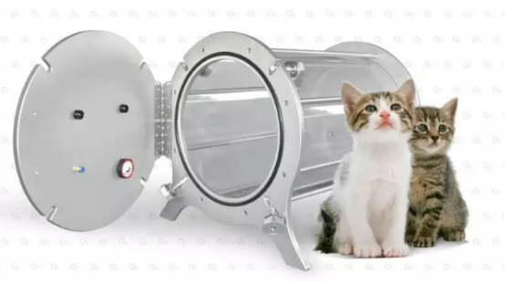 koty hiperbaria oddech zdrowy